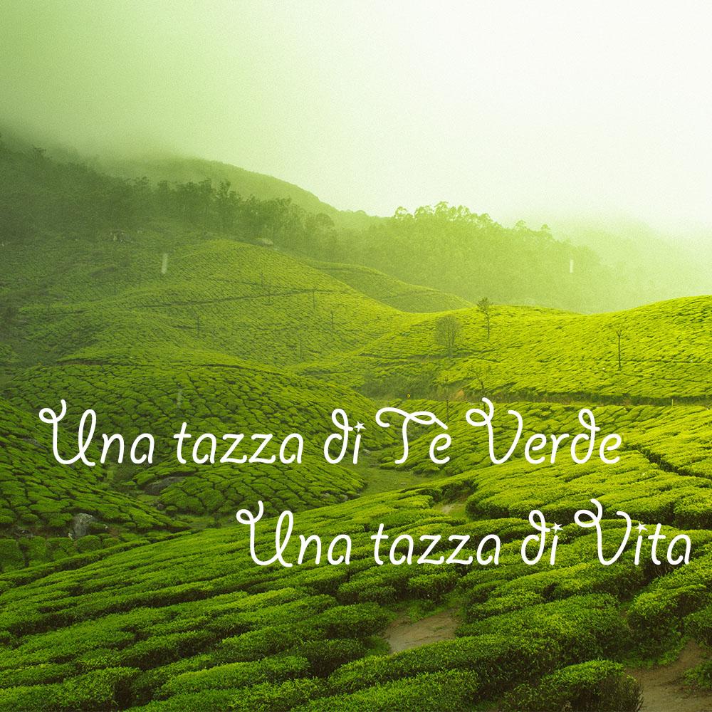 Tè verde, una tisana dalle mille proprietà